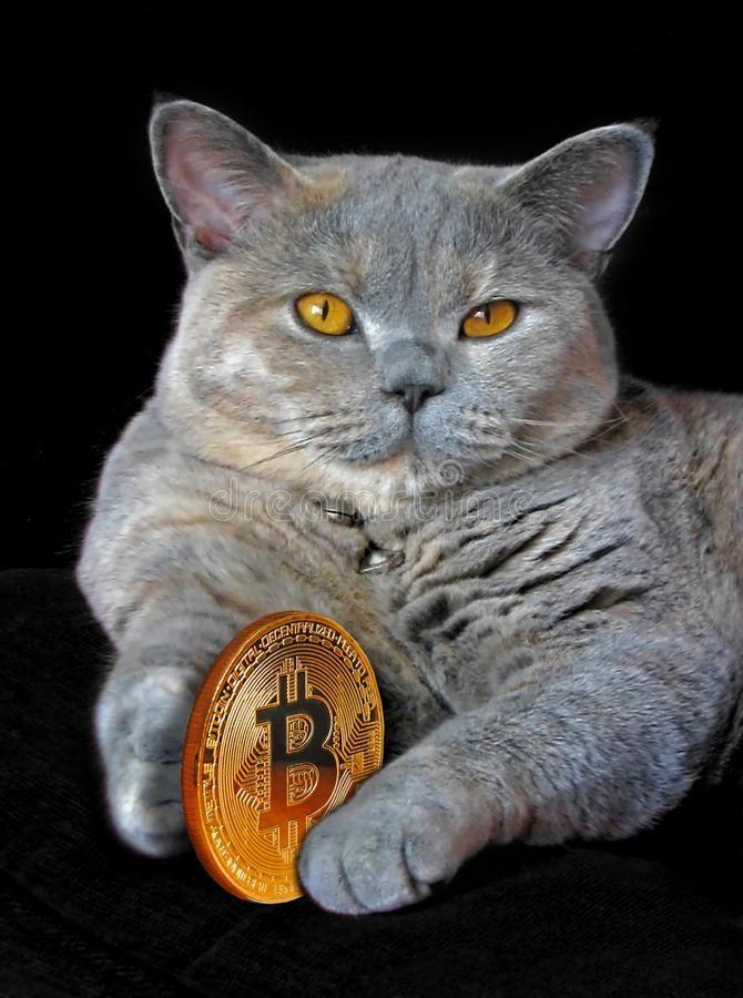 cumpărați portofel hardware bitcoin