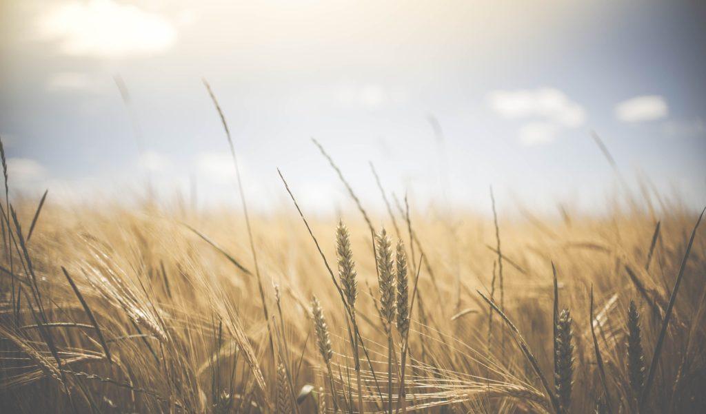 acceptarea tranzacționării cerealelor robot pentru opțiuni binare 2020